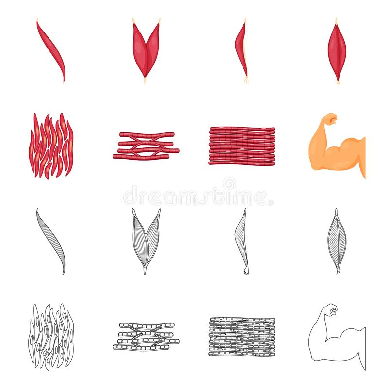 Isolated object of fiber and muscular logo. Collection of fiber and body  vector icon for stock. Vector design of fiber and muscular icon. Set of fiber and body royalty free illustration