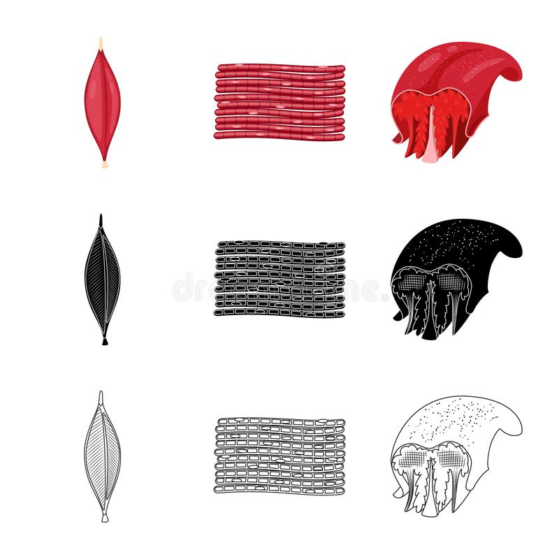 Isolated object of fiber and muscular logo. Collection of fiber and body vector icon for stock. Vector design of fiber and muscular icon. Set of fiber and body vector illustration