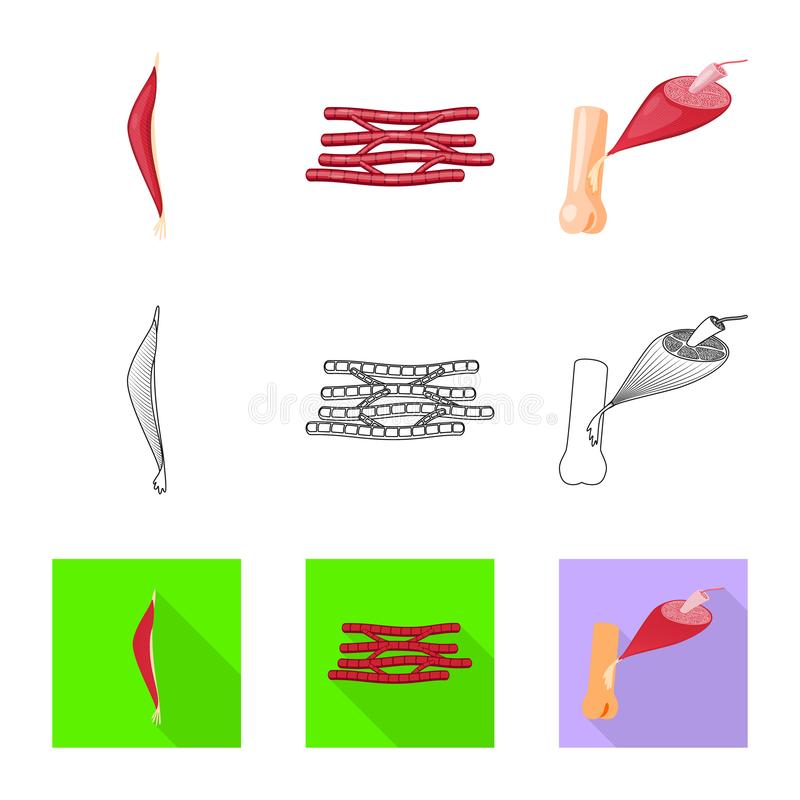 Isolated object of fiber and muscular sign. Set of fiber and body vector icon for stock. Vector design of fiber and muscular logo. Collection of fiber and body vector illustration