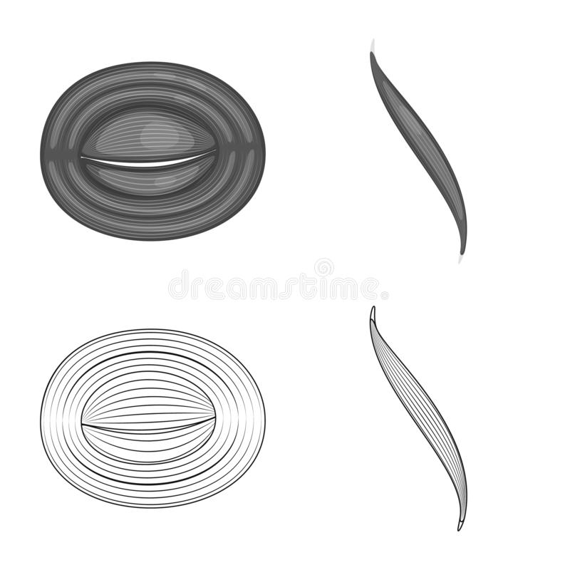 Vector design of fiber and muscular logo. Collection of fiber and body stock symbol for web. Vector illustration of fiber and muscular icon. Set of fiber and stock illustration