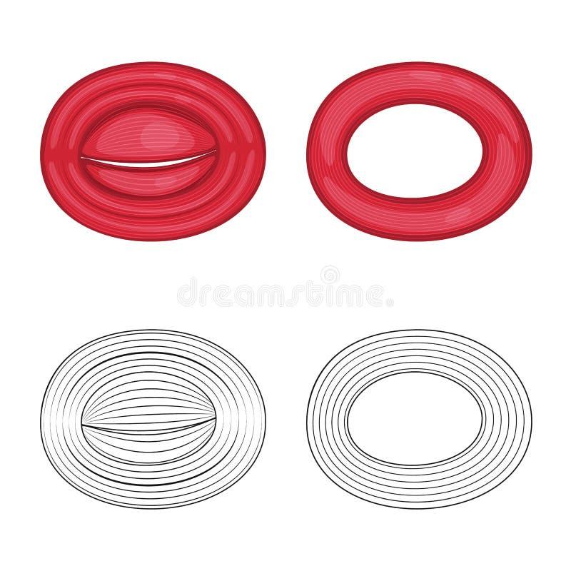 Vector design of fiber and muscular logo. Set of fiber and body stock vector illustration. Vector illustration of fiber and muscular icon. Collection of fiber vector illustration