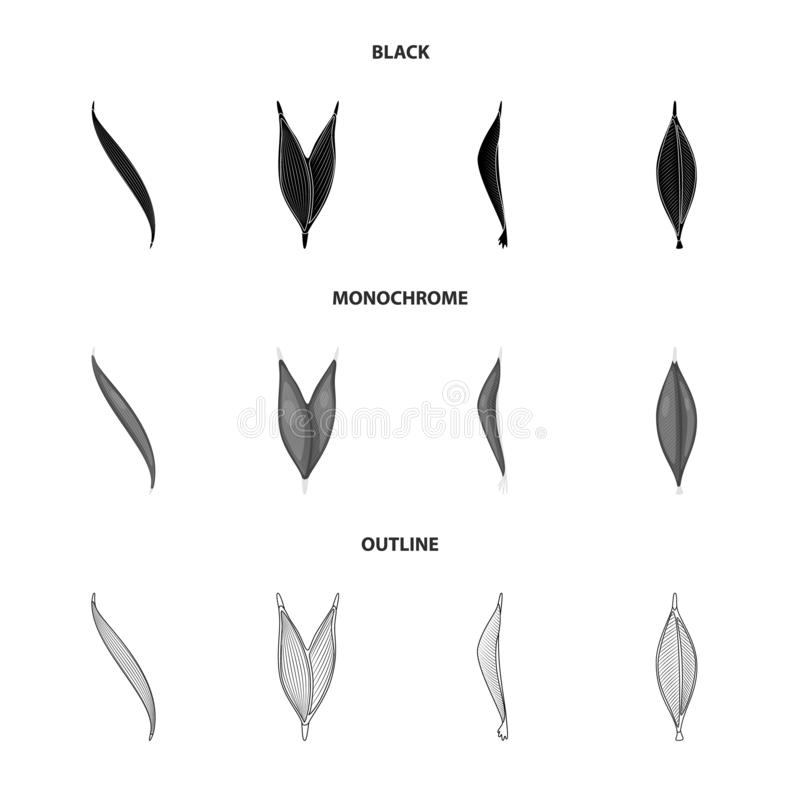 Isolated object of fiber and muscular sign. Collection of fiber and body vector icon for stock. Vector design of fiber and muscular logo. Set of fiber and body vector illustration
