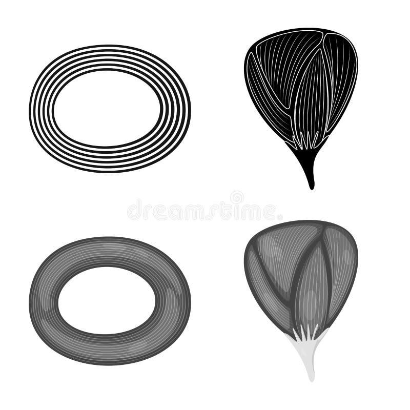 Vector design of fiber and muscular logo. Set of fiber and body stock vector illustration. Vector illustration of fiber and muscular icon. Collection of fiber royalty free illustration