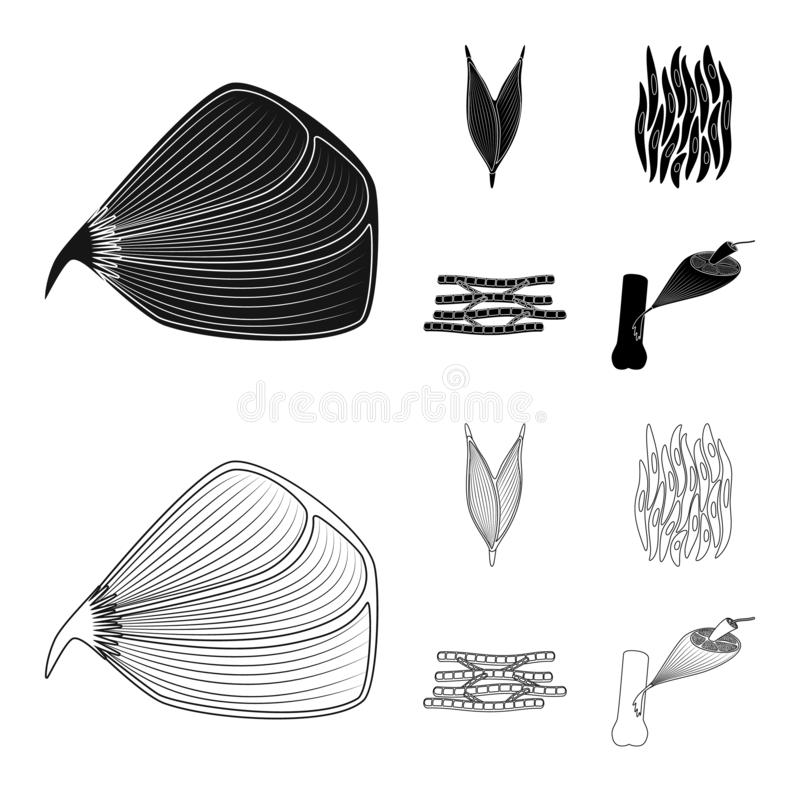 Vector design of fiber and muscular sign. Collection of fiber and body vector icon for stock. Vector illustration of fiber and muscular logo. Set of fiber and stock illustration