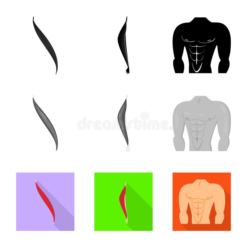 Isolated object of fiber and muscular symbol. Collection of fiber and body vector icon for stock. Vector design of fiber and muscular sign. Set of fiber and royalty free illustration