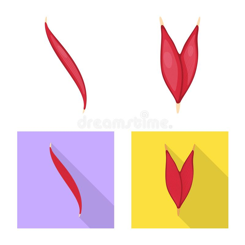 Isolated object of fiber and muscular icon. Collection of fiber and body stock symbol for web. Vector design of fiber and muscular symbol. Set of fiber and body vector illustration
