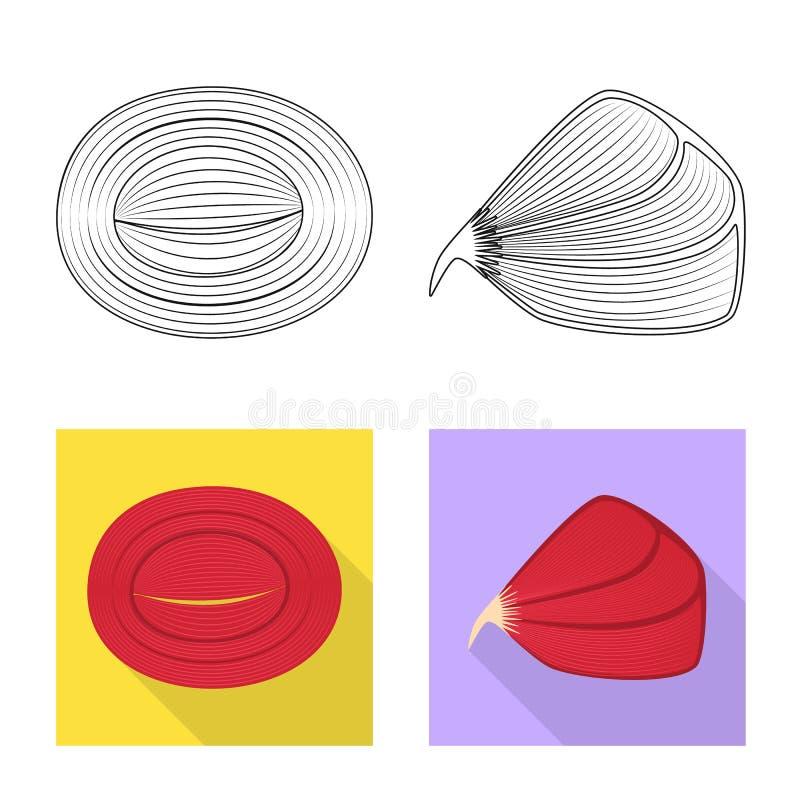Vector design of fiber and muscular symbol. Set of fiber and body stock vector illustration. Vector illustration of fiber and muscular sign. Collection of fiber stock illustration
