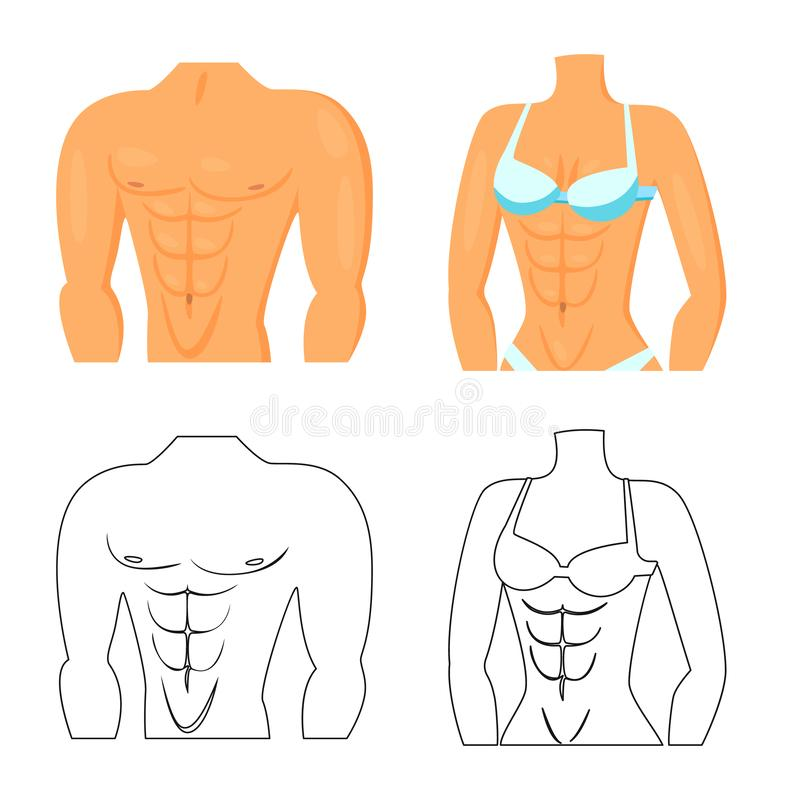 Isolated object of fiber and muscular icon. Collection of fiber and body stock vector illustration. Vector design of fiber and muscular symbol. Set of fiber and stock illustration