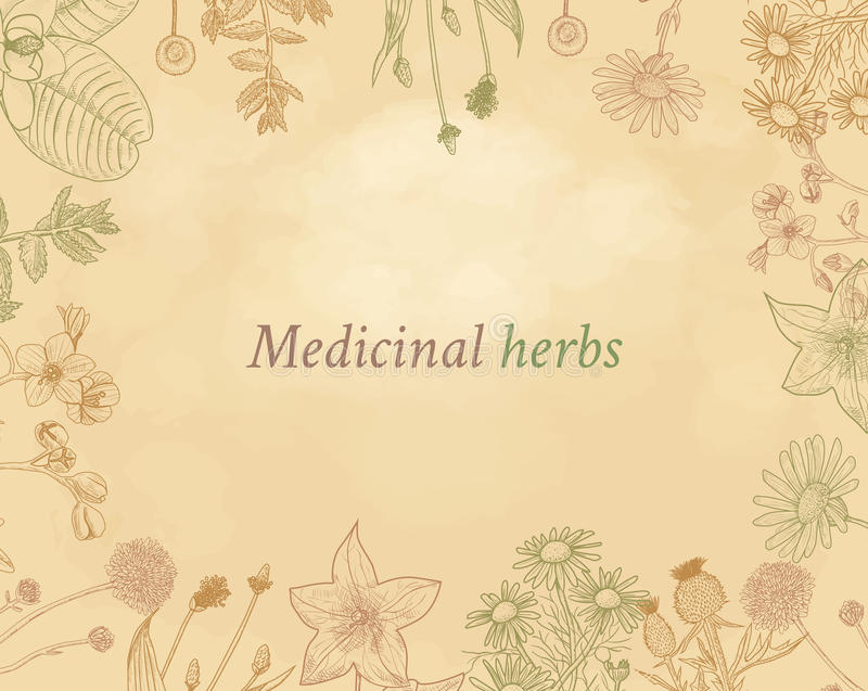 Vector design with hand drawn herbs. Decorative background with vintage medicinal herbs sketch frame on grange vector illustration
