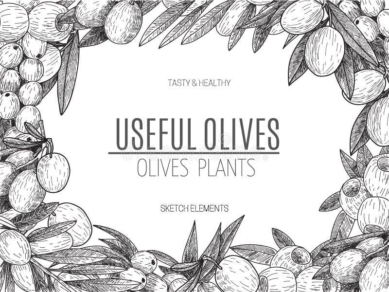 Vector design of hand drawn olives. Vintage sketch style illustration. Organic eco food. Whole , sliced pieces half stock illustration
