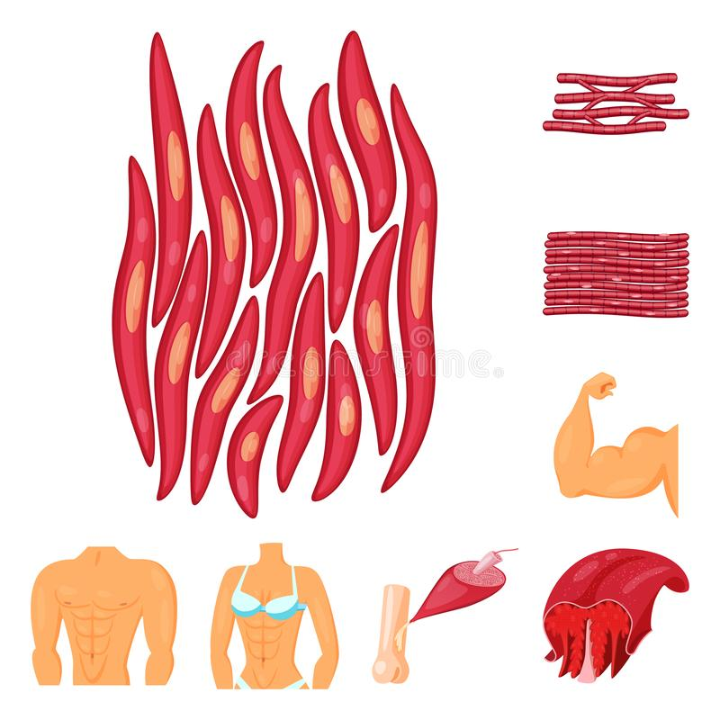 Isolated object of muscle and cells logo. Set of muscle and anatomy stock symbol for web. Vector design of muscle and cells icon. Collection of muscle and stock illustration