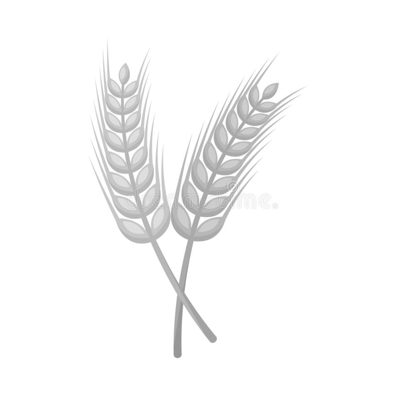 Free Vector Design Of Wheat And Stalk Icon. Set Of Wheat And Gold Stock Vector Illustration. Royalty Free Stock Images - 162917609