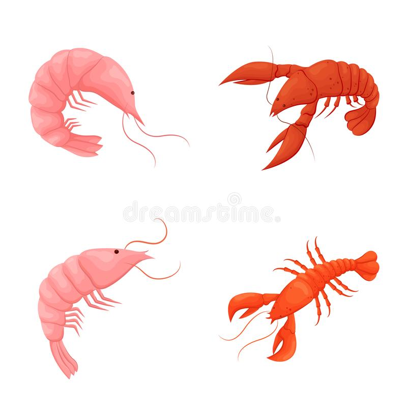 Isolated object of shrimp and crab logo. Collection of shrimp and sea vector icon for stock. vector illustration