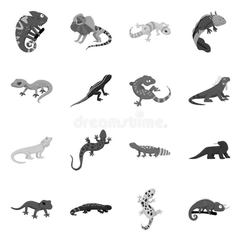 Isolated object of wild and exotic logo. Collection of wild and fauna stock symbol for web. Vector design of wild and exotic icon. Set of wild and fauna stock vector illustration
