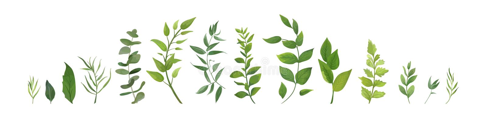 Vector designer elements set collection of green forest fern, tr. Opical green eucalyptus greenery art foliage natural leaves herbs in watercolor style stock illustration