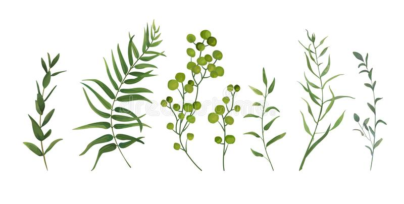 Vector designer elements set collection of green forest fern, tr. Opical palm green berry greenery art foliage natural leaves herbs in watercolor style vector illustration