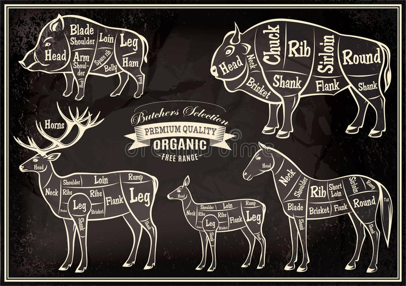 Vector diagram cut carcasses boar, bison, deer, horse. Vector diagram cut carcasses of boar, bison, deer, horse royalty free illustration