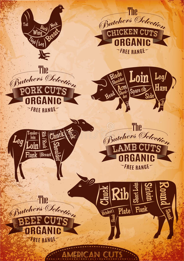 Vector diagram cut carcasses. Of chicken, pig, cow, lamb vector illustration