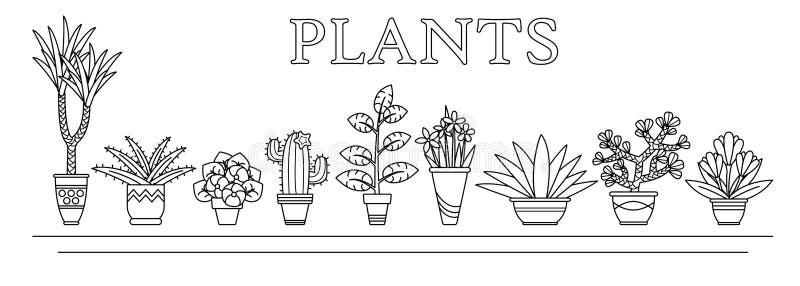 Vector die Illustrationsblumen und -anlagen, die in den Vasen in der Linie Art saftig sind vektor abbildung