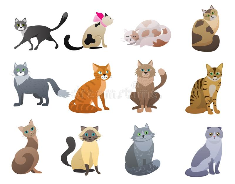Vector diversos caracteres del animal doméstico de las razas del gato divertido y lindo de la historieta fijados ilustración del vector