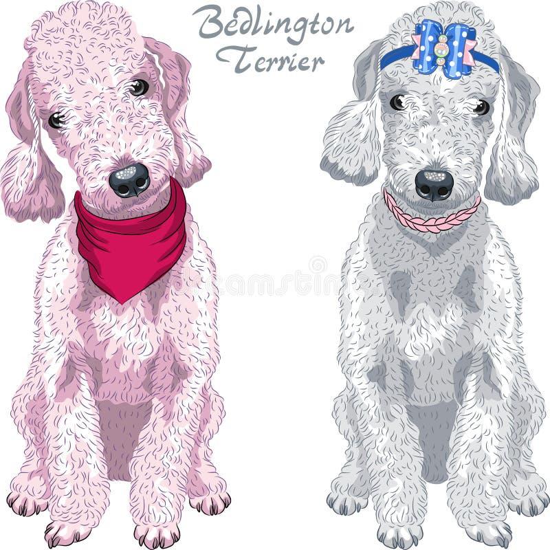 Vector dog Bedlington Terrier breed vector illustration