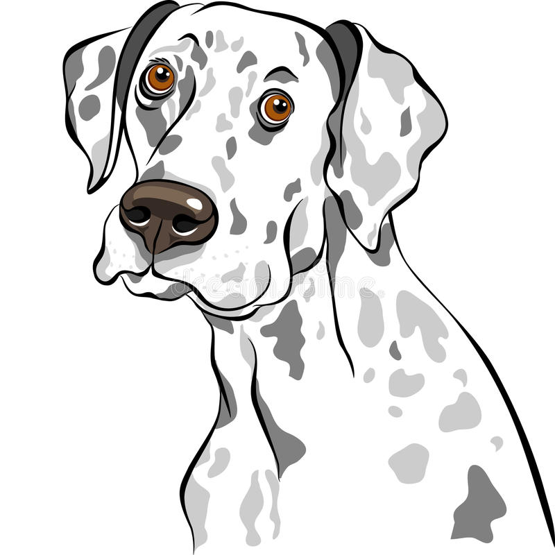 Download Vector Dog Dalmatian breed stock vector. Illustration of drawing - 23547951