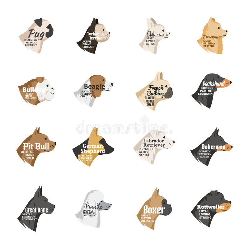 Vector dog icons collection on white. Vector dog breeds icons collection with names and personality description on white for dog club, pet clinic and shop royalty free illustration