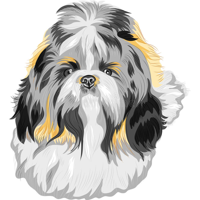Vector Dog Shih Tzu breed stock vector. Illustration of ...