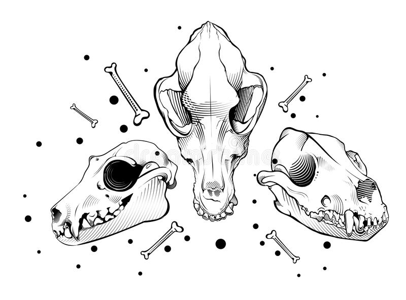Vector dog skull. engraving style. Vector dog skulls. engraving style royalty free illustration