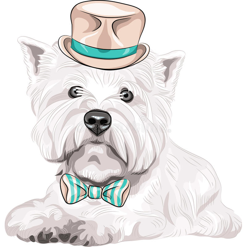 Vector dog West Highland White Terrier breed in ha. Color sketch closeup portrait serious dog West Highland White Terrier breed in a beige silk hat and bow tie vector illustration