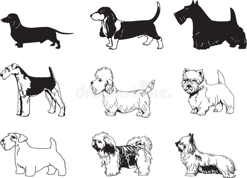 Vector Dogs Illustration Royalty Free Stock Image