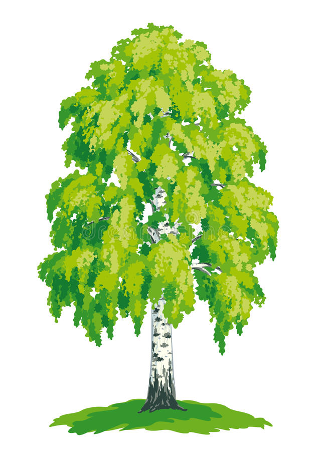 Vector drawing of birch royalty free illustration