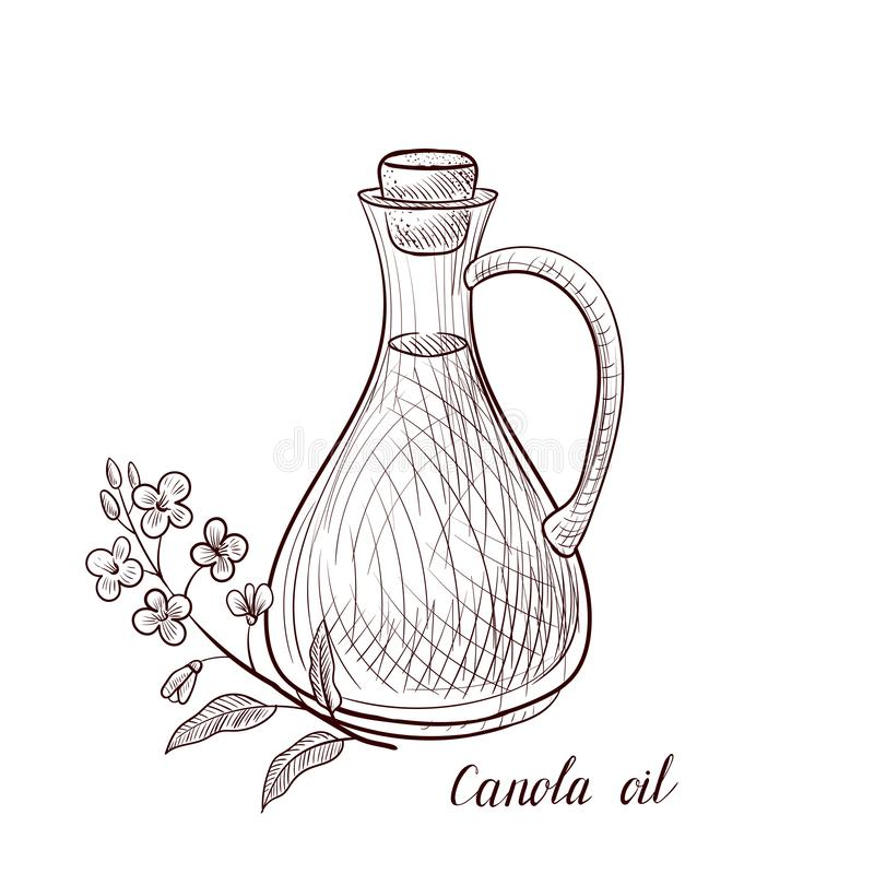Vector drawing canola oil royalty free illustration