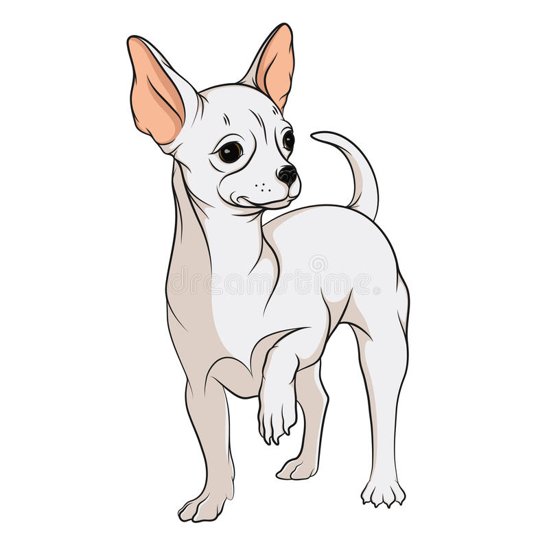 Vector drawing of a chihuahua. EPS10. Vector drawing of a chihuahua. Isolated objects on a white background vector illustration