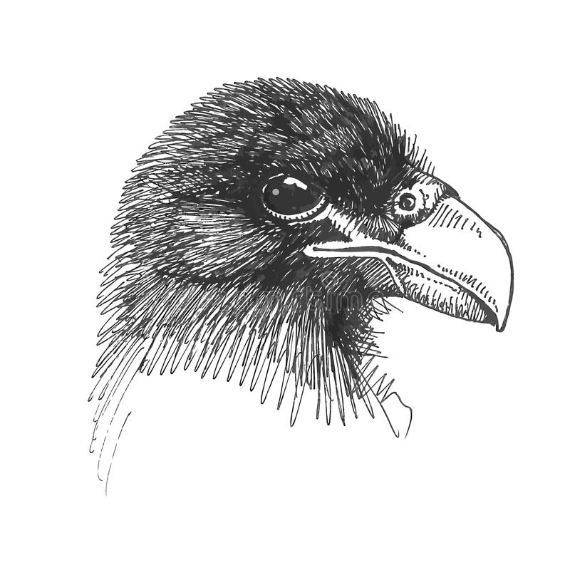 Vector drawing of the Eagle head - illustration stock images