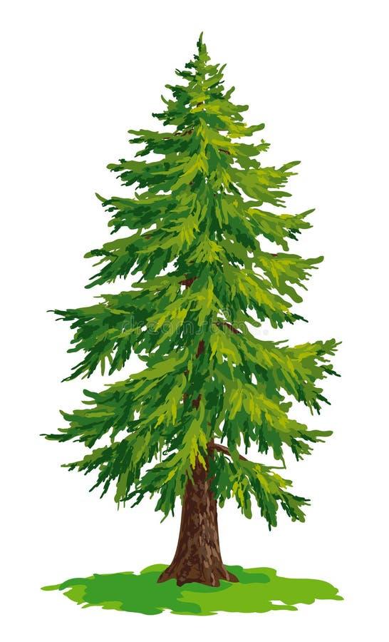 Vector drawing of fir tree vector illustration