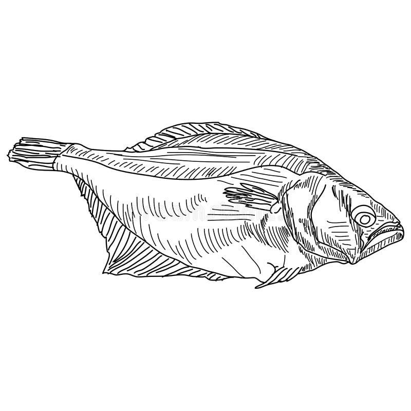 Vector drawing hand fish