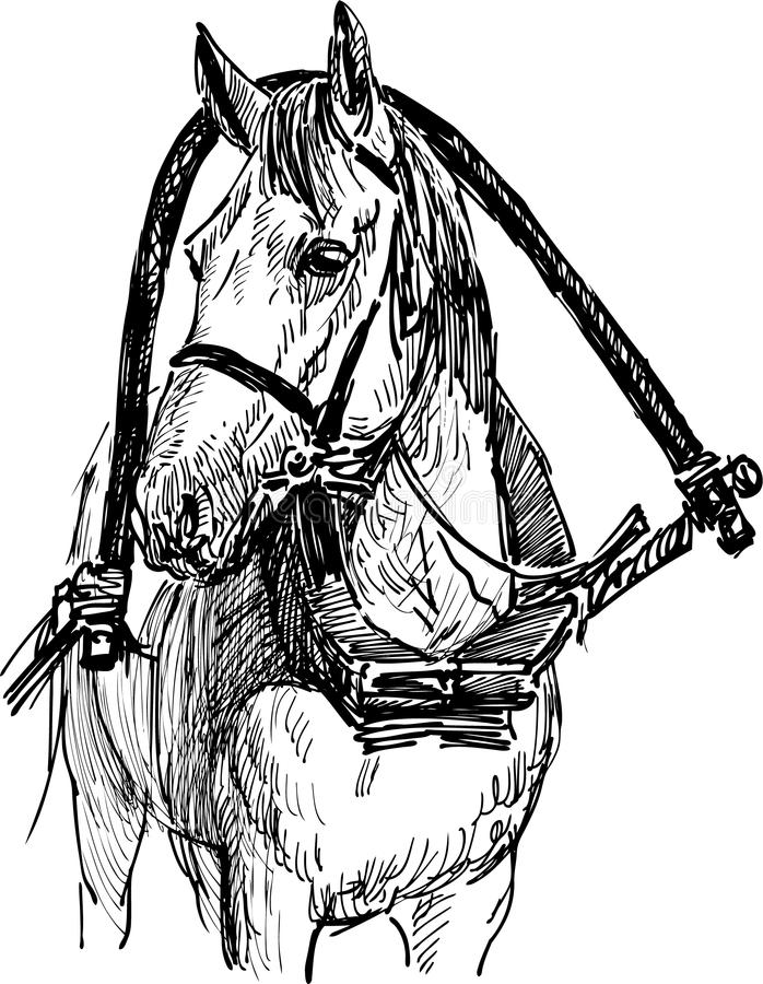 Harnessed horse