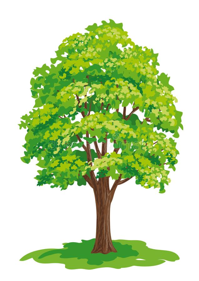 Vector drawing of maple tree vector illustration