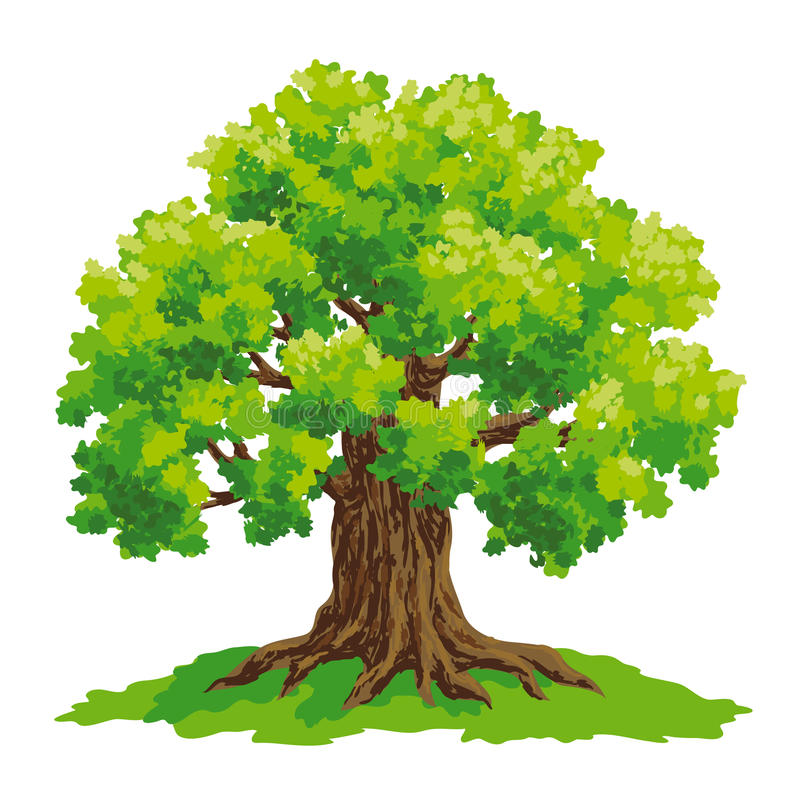 Vector drawing of oak royalty free illustration