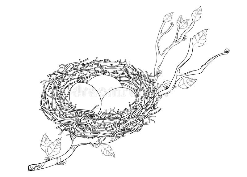 Vector drawing of outline tree branch with bird nest with three eggs in black isolated on white background. Bird family house. vector illustration
