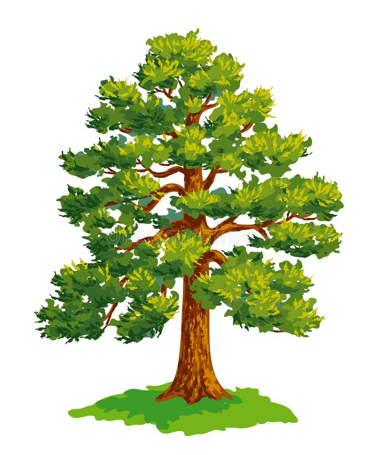 Vector drawing of pine tree stock illustration
