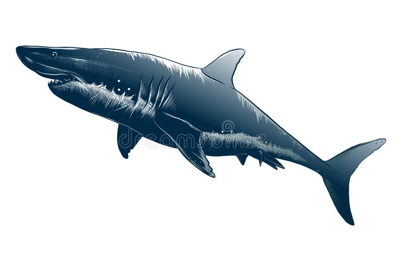 Vector drawing of shark in black color, isolated on white background. Graphic illustration, hand drawing. Drawing for vector illustration