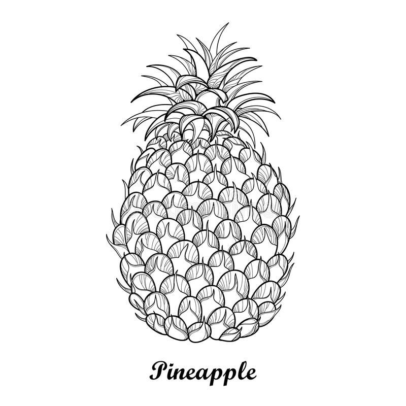 Free Vector Drawing With Outline Ananas Or Pineapple Fruit And Leaf In Black Isolated On White Background. Perennial Tropical Plant. Royalty Free Stock Photography - 95092187