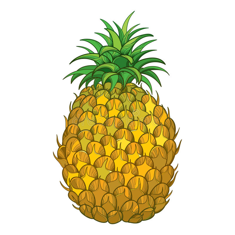 Free Vector Drawing With Outline Ananas Or Pineapple Fruit In Yellow And Green Leaf Isolated On White Background. Tropical Fruit.l Royalty Free Stock Images - 95250479