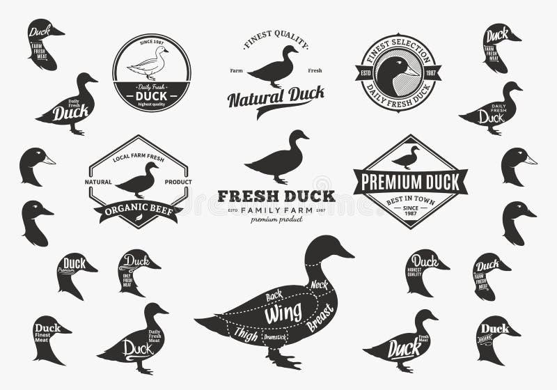 Vector Duck Logo, iconos, cartas y elementos del diseño stock de ilustración
