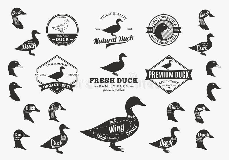 Vector Duck Logo, Icons, Charts and Design Elements stock illustration