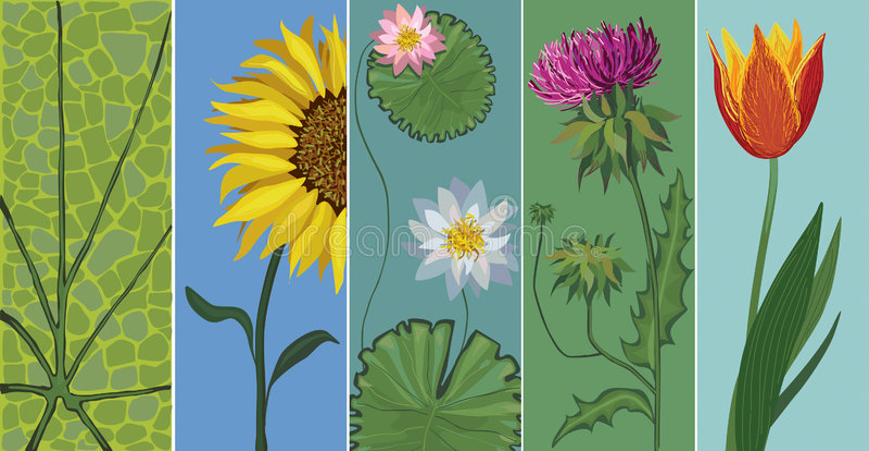 Vector editable set of flowers vector illustration