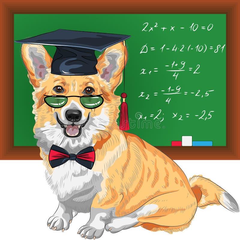 Vector een diploma behaalde corgi van hondpembroke welsh vector illustratie
