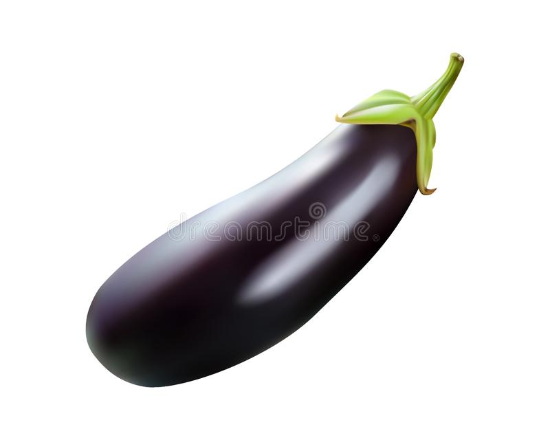 Vector eggplant illustration realistic isolated on white background. Design for culinary products, seasoning packages, recipe websites, cooking books etc royalty free illustration